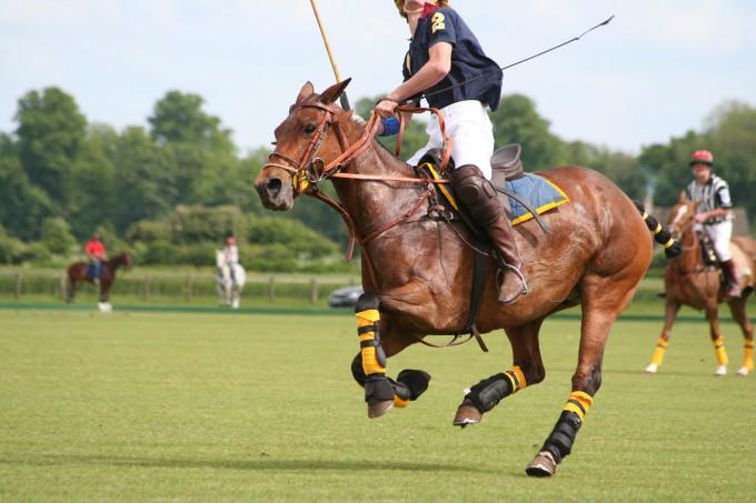 Hästpolo