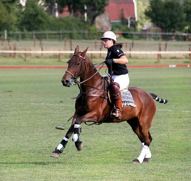 Hästpolo – en snobbsport?